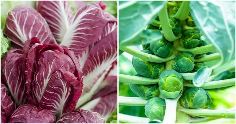 Best Green Leafy Vegetables That Can Grow Well In Containers For Summer Salad