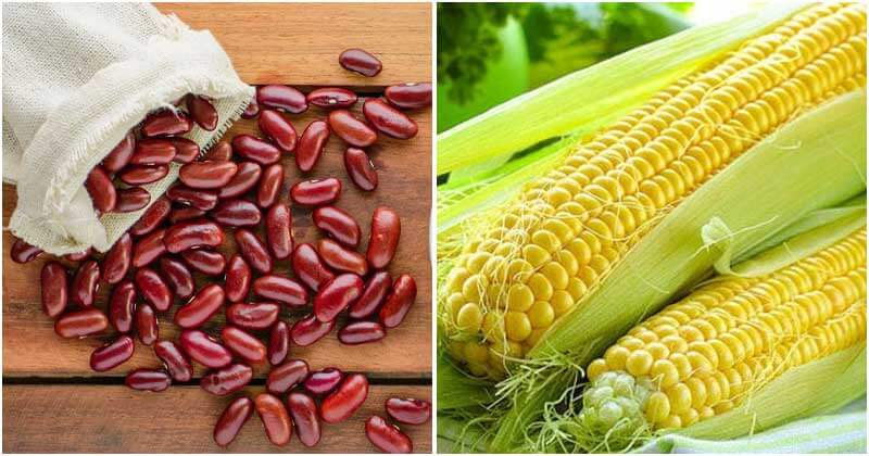 Best High Protein Vegetables That You Should Know