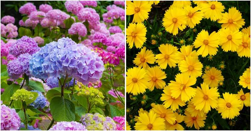 Most Beautiful Plants Can Bloom All Summer