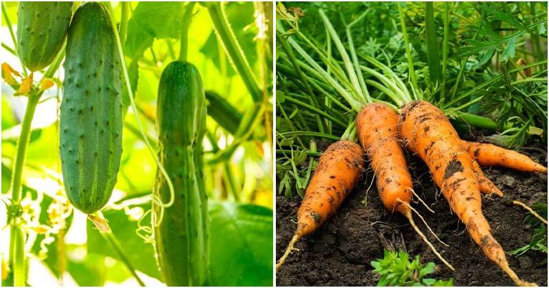 The Fastest Growing Vegetables And Be Harvested In No Time