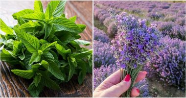 Top 10 Perennial Herbs You Can Plant Once And Enjoy For Years