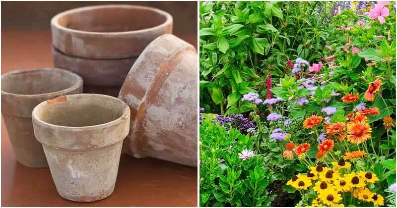 Uses of Baking Soda In Your Garden
