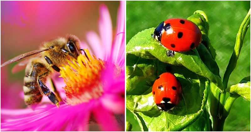 10-Beneficial-Garden-Insects-You-Should-Know-ft