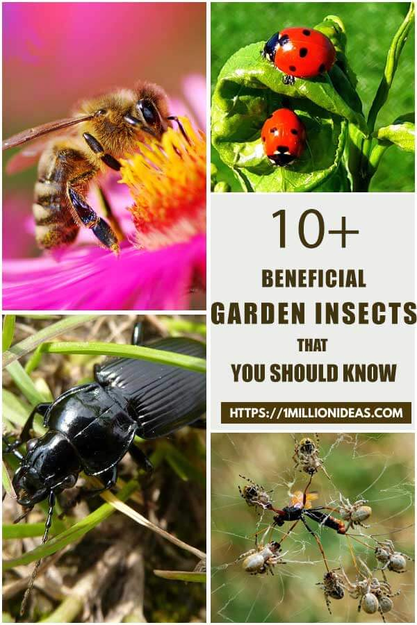 10-Beneficial-Garden-Insects-You-Should-Know-ft1