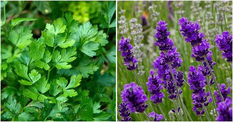 10 Best Herbs To Grow In The Fall