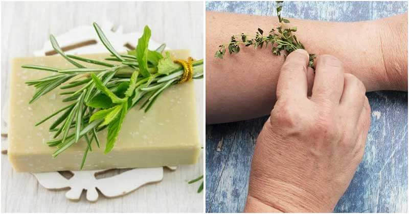 10 Best Uses Of Thyme
