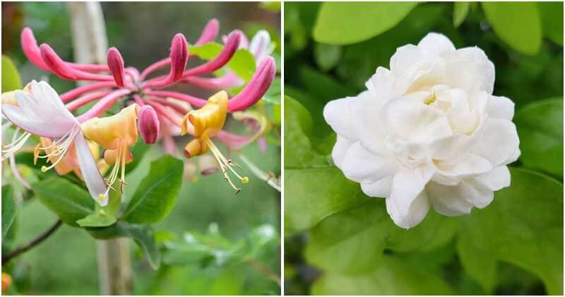 10 Lucky Plants To Grow In Your Home And Garden