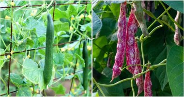 10 Veggies And Fruits To Grow Vertically In Small Spaces