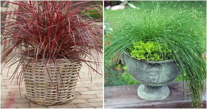 11 Best Kinds Of Ornamental Grasses For Containers