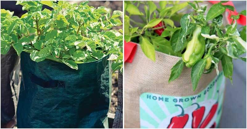 12-Best-Grow-In-Bag-Plants-You-Should-Know-ft