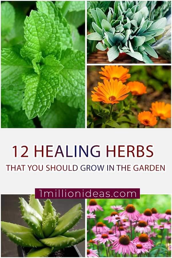 12 Healing Herbs That You Should Grow In Your Garden