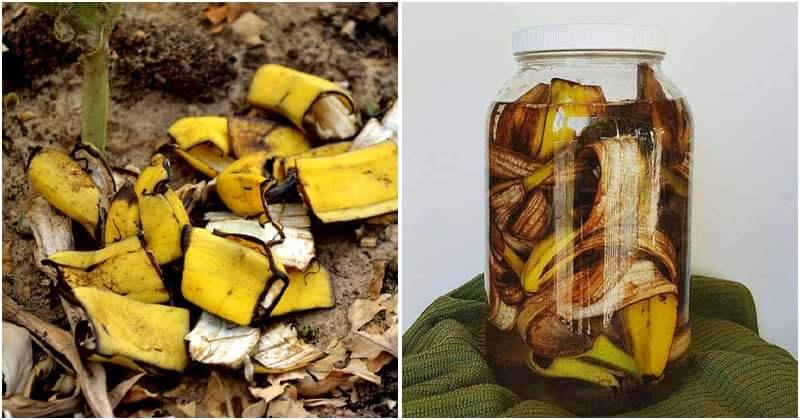 14-Amazing-Uses-Of-Banana-Peels-For-Your-Garden-ft