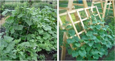 15 Easiest DIY Cucumber Trellis Ideas That Everyone Can Make