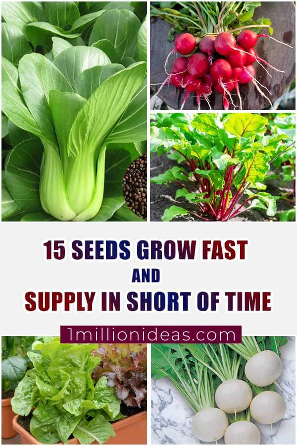 15 Seeds Grow Fast And Supply In Short of Time