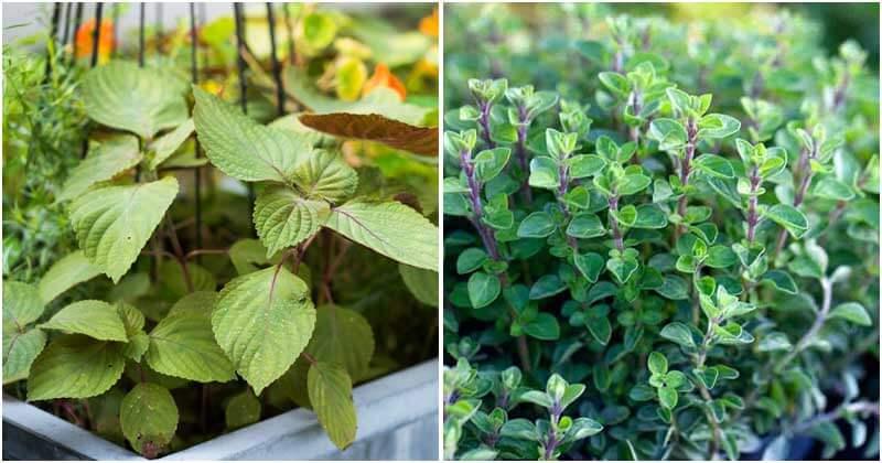 16-Exotic-Herbs-To-Grow-In-Your-Garden-ft