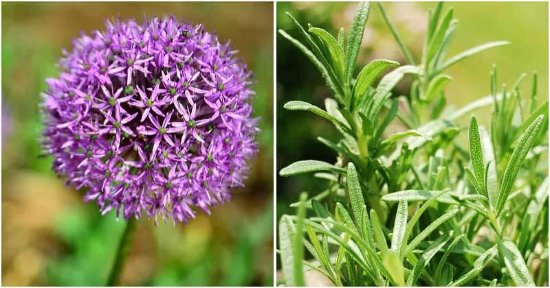 16 Plants Can Repel Insects Effectively