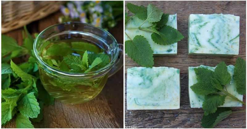 17 Best Uses Of Lemon Balm In Your Kitchen