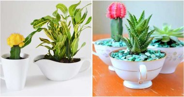 19 Adorable Teacup Planter Ideas That You Will Fall In Love With