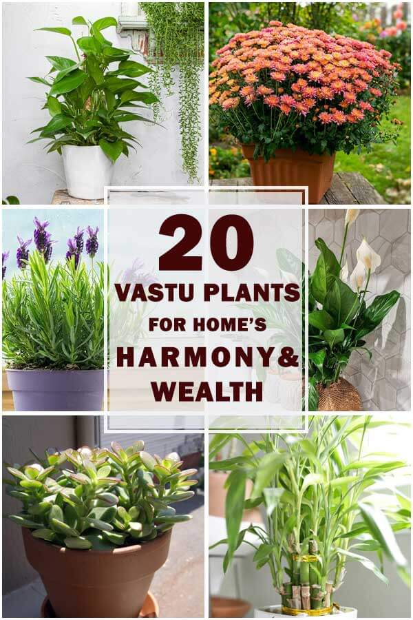20-Best-Vastu-Plants-For-Harmony-And-Wealth-ft2