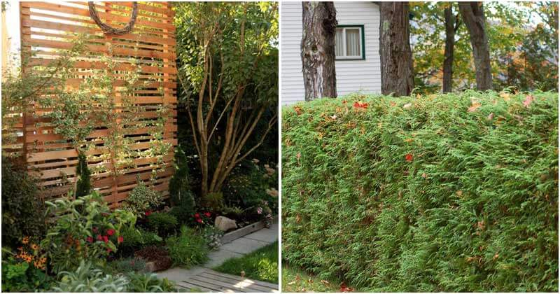 20-Inspiring-Ideas-To-Create-Privacy-For-Your-Backyard-ft