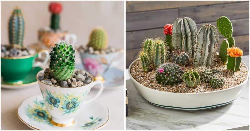 20-Stunning-DIY-Catus-Gardens-For-Your-Home-ft