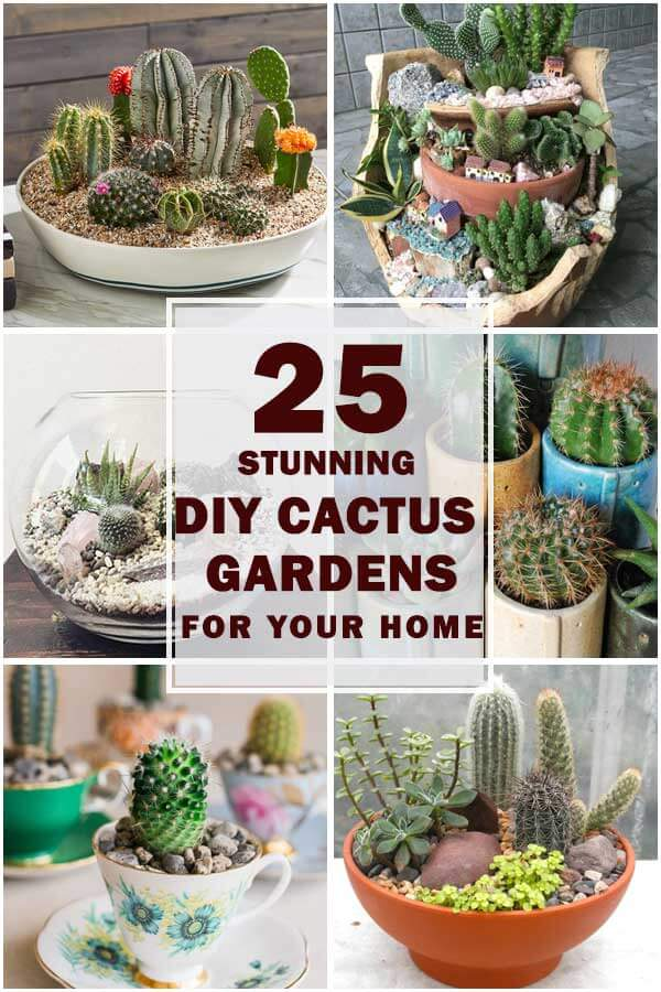 20-Stunning-DIY-Catus-Gardens-For-Your-Home-ft1
