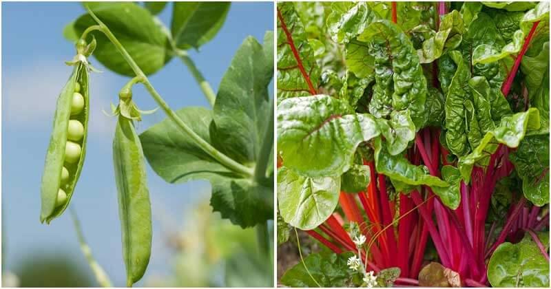 21 Best Vegetables For Fall