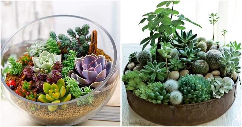 25-Stunning-DIY-Succulent-Indoor-Gardens-ft2