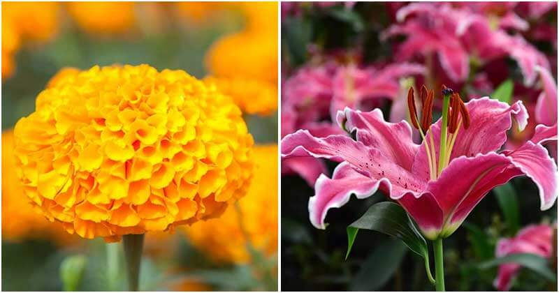 30-Summer-Flowers-That-Will-Be-Striking-In-Your-Garden-ft