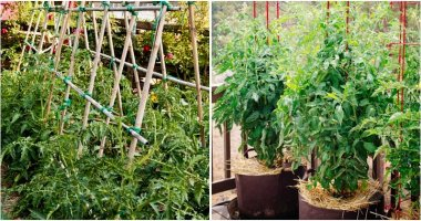 30-Tomato-Support-Ideas-For-Better-Yield-ft