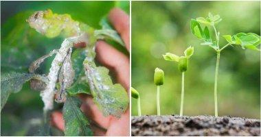 6 Best Uses Of Cornstarch In Your Garden