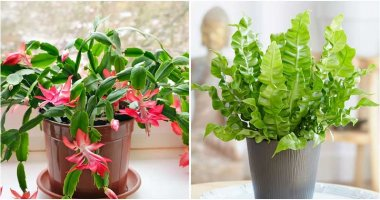 7 Best Plants As Gifts To Give Friend