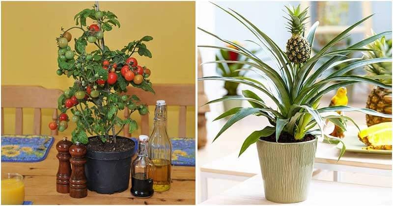 7 Edible Houseplants That You Will Fall In Love