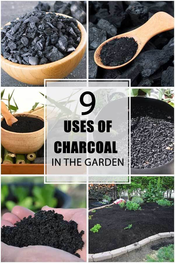 9 Amazing Uses of Charcoal For Your Garden