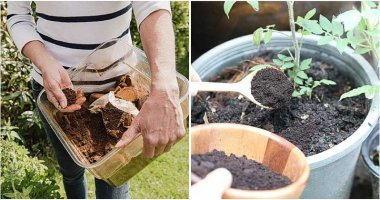 9 Best Uses Of Coffee Grounds In Your Garden
