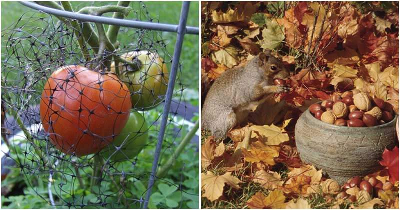 9 Natural Ways To Repel Squirrels From Your Garden
