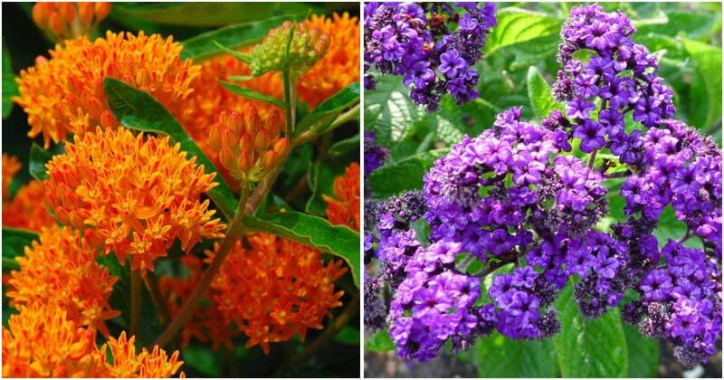Best Beautiful Flowers To Attract Bees
