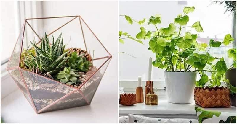 Best Ways To Increase Humidity For Indoor Plants
