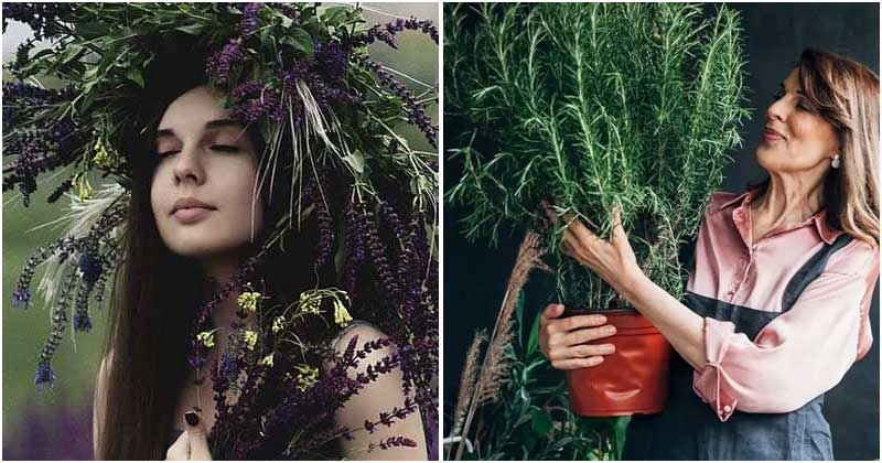Collection of Best Herbs That Are Good For Women