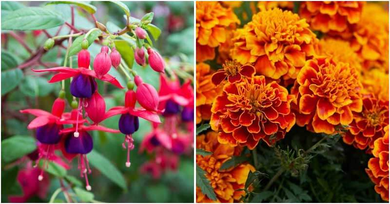 Easiest and Most Beautiful Flowers That You Should Grow In Garden
