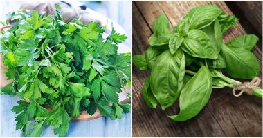 Herbs Can Control Vegetable Garden Pests