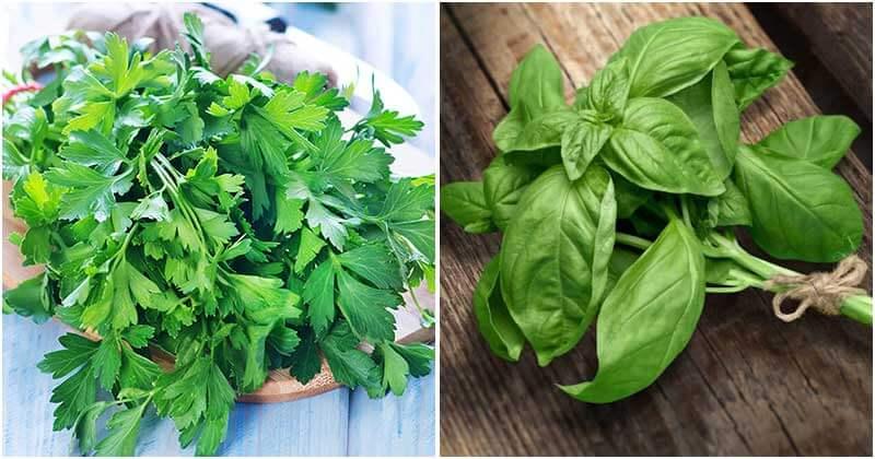 Herbs Can Control Vegetable Garden Pests