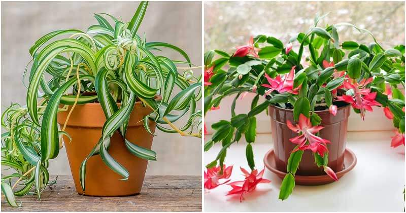 Indoor Plants Produce Oxygen That Is Good For Health