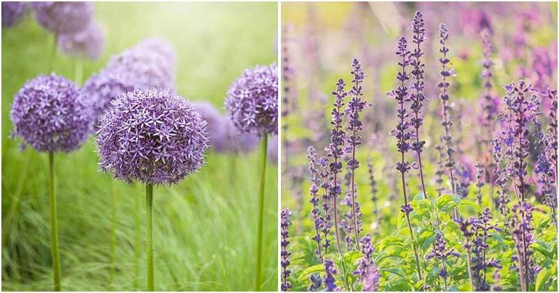Most-Beautiful-Purple-Flowers-For-Your-Garden-ft
