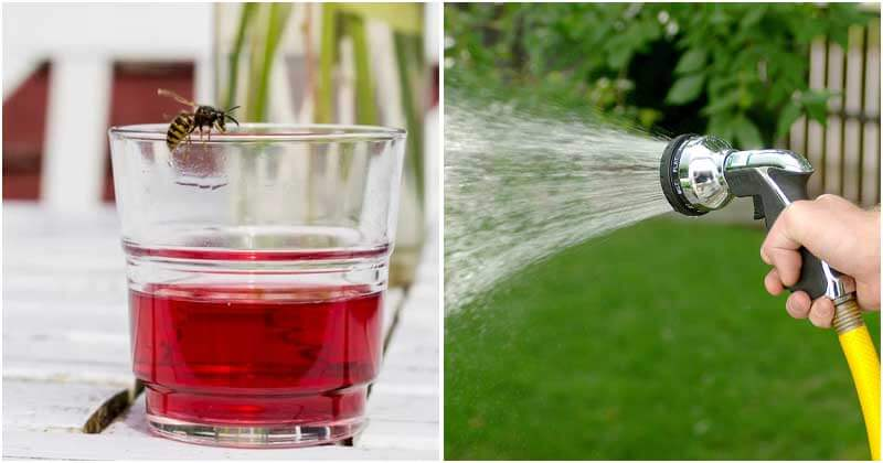 Safe And Effective Ways To Repel Wasps