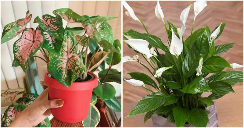 Toxic-Indoor-Plants-To-Keep-Out-Of-The-Reach-Of-Your-Kids-And-Pets-ft