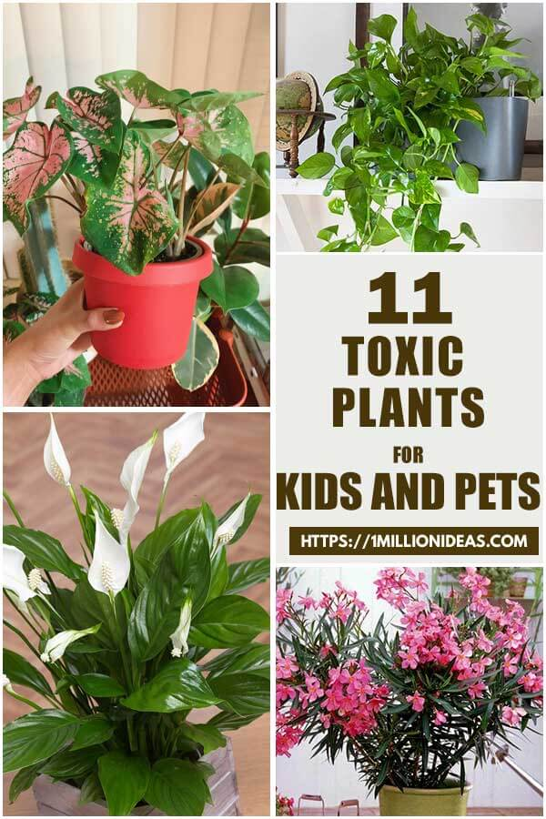 Toxic-Indoor-Plants-To-Keep-Out-Of-The-Reach-Of-Your-Kids-And-Pets-ft1
