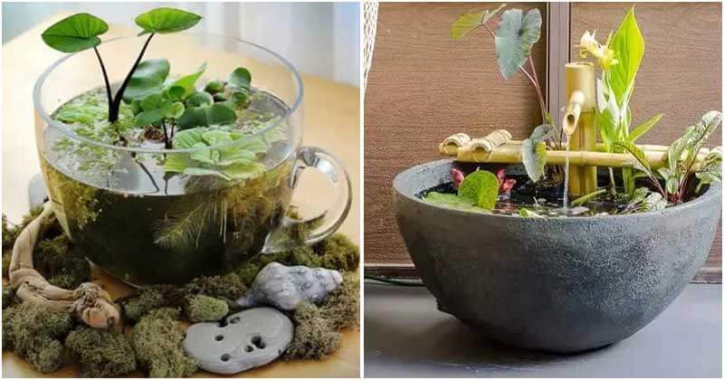 10 Creative DIY Tabletop Water Garden Ideas