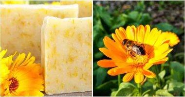 10 Good Reasons To Grow Calendula In Your Garden