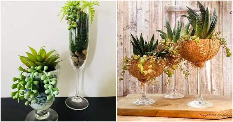 10 Ideas To Grow Succulent in Wine Glass